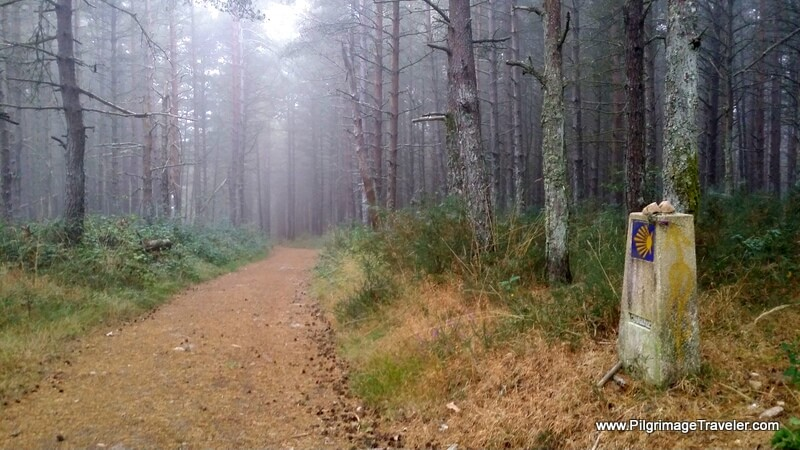Serene Walk Thru the Misty Forest, Galicia, Spain