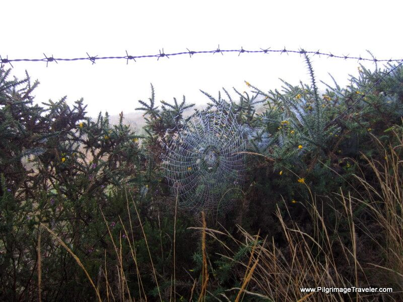 Spider web in the mist, Galicia, Spain