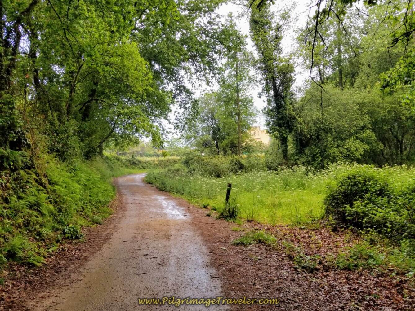 Lovely Lane Called the Camino Barros on day twenty on the central route of the Portuguese Camino