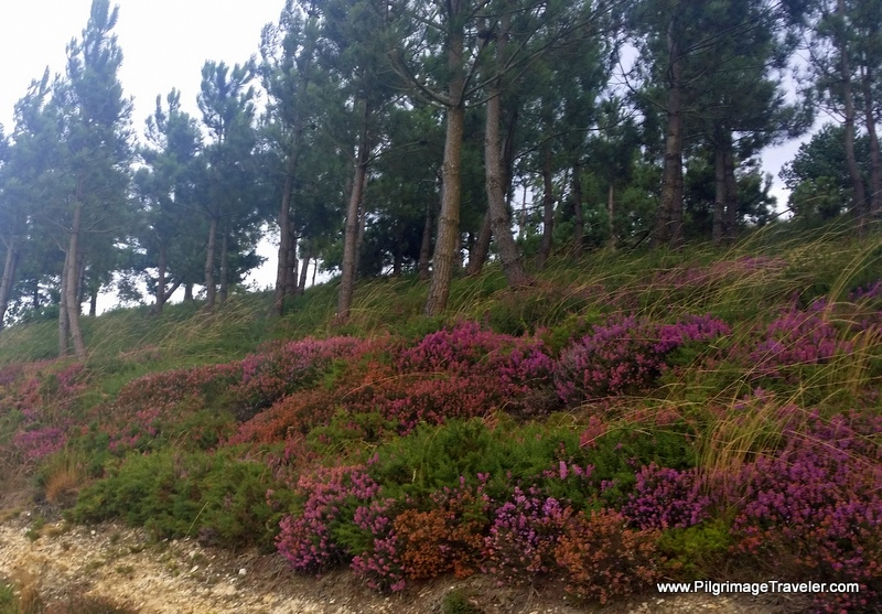 Heather on the Hospitales Route
