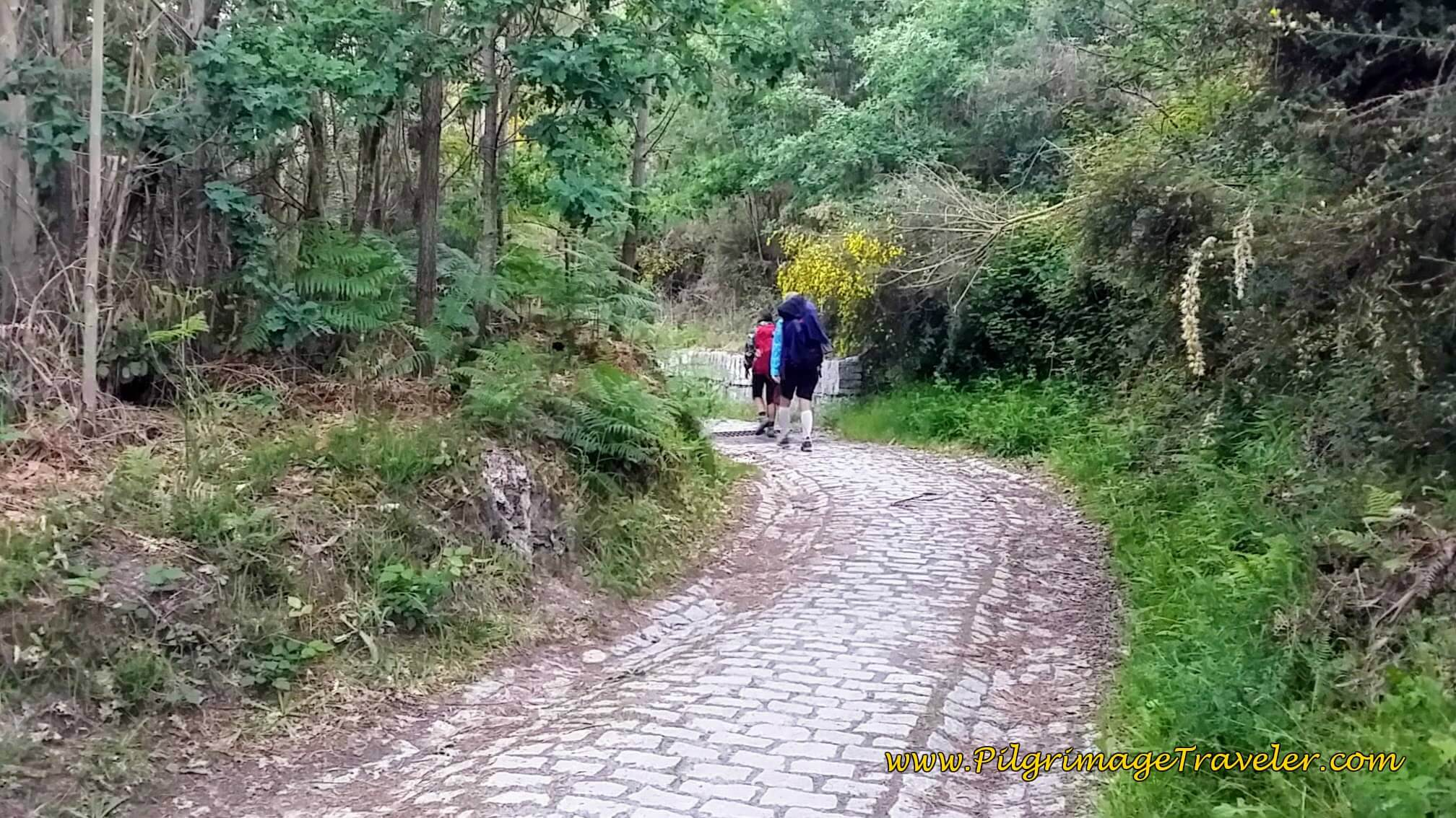Back Into the Forest on Cobblestone Path on Day Twenty-Four, Portuguese Way