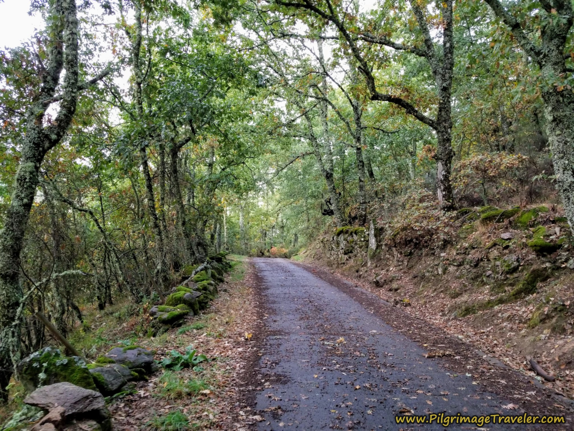The Forested Secondary Road to the Santuario