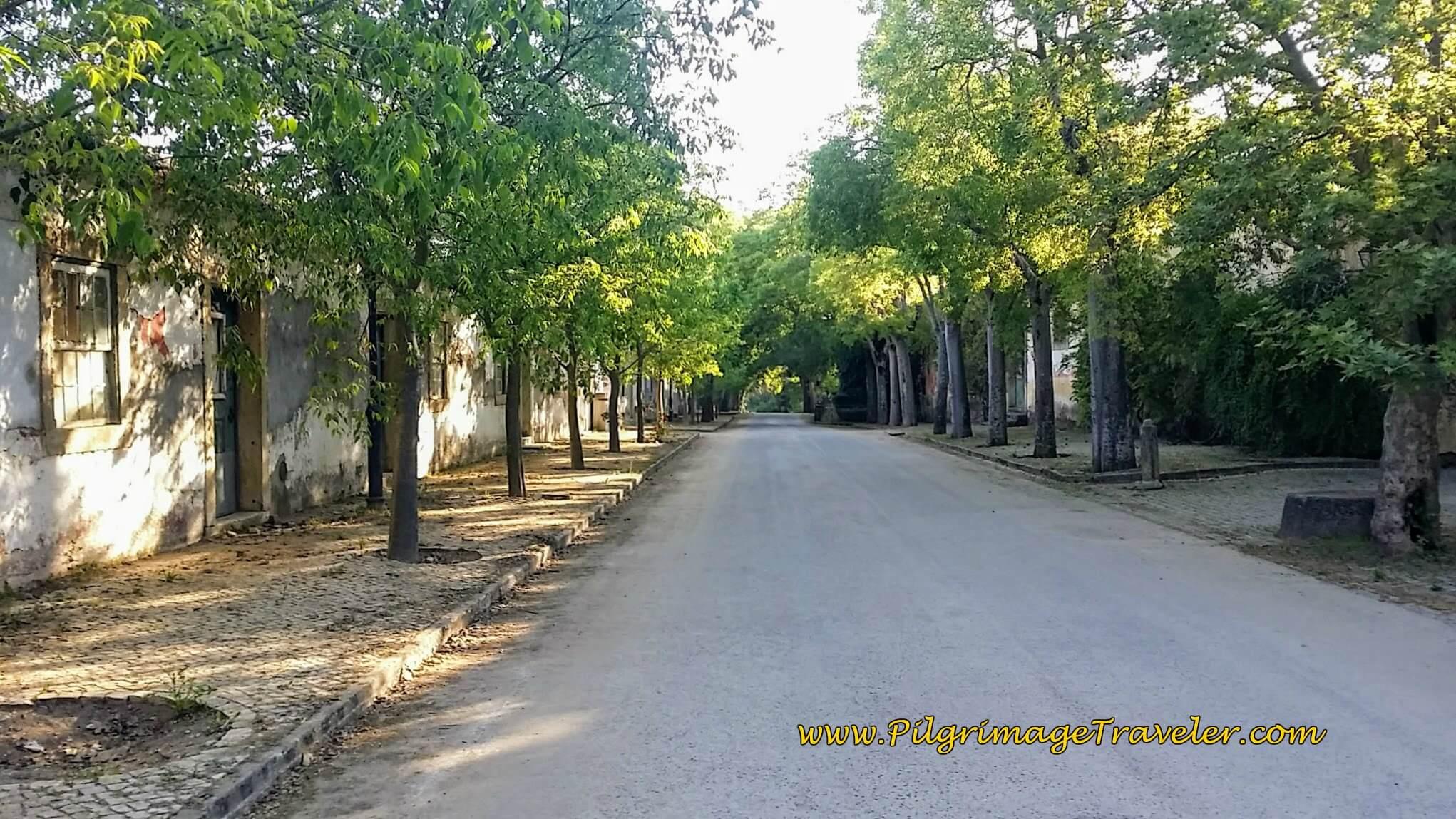Tree-lined Street in the Quinta da Cardiga