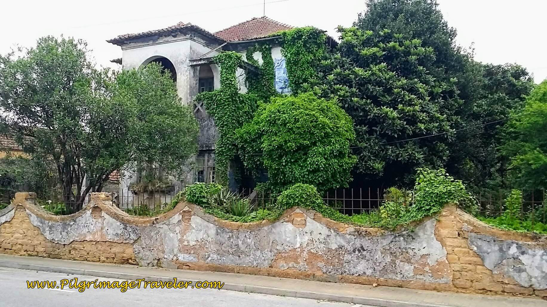 Overgrown Estate on the Rua de Abril in Mourisca do Vouga, Portugal on day twelve of the Camino.