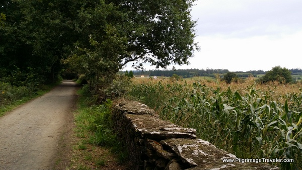 Rural Path and Cornfield on the Camino Frances