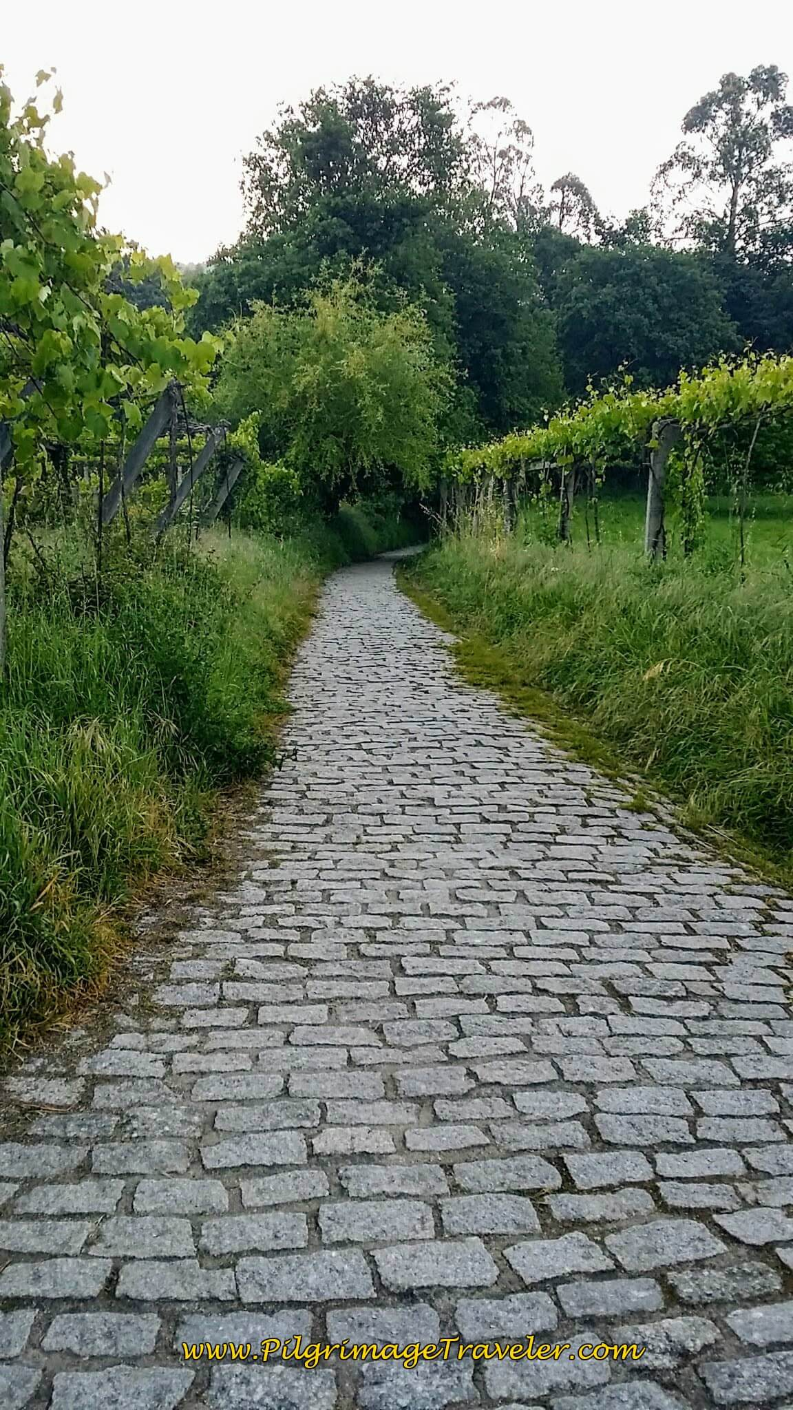 Cobblestone Path Look-Back, Coming Out of Forest on Day Twenty-Four, Portuguese Way