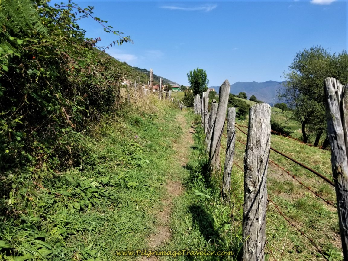 Path through Meadow with Llanos de Somerón Ahead on day four of the Camino de San Salvador