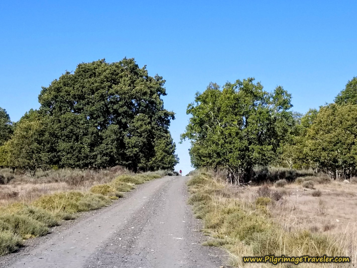 The Road to Cernadilla on the Camino Sanabrés
