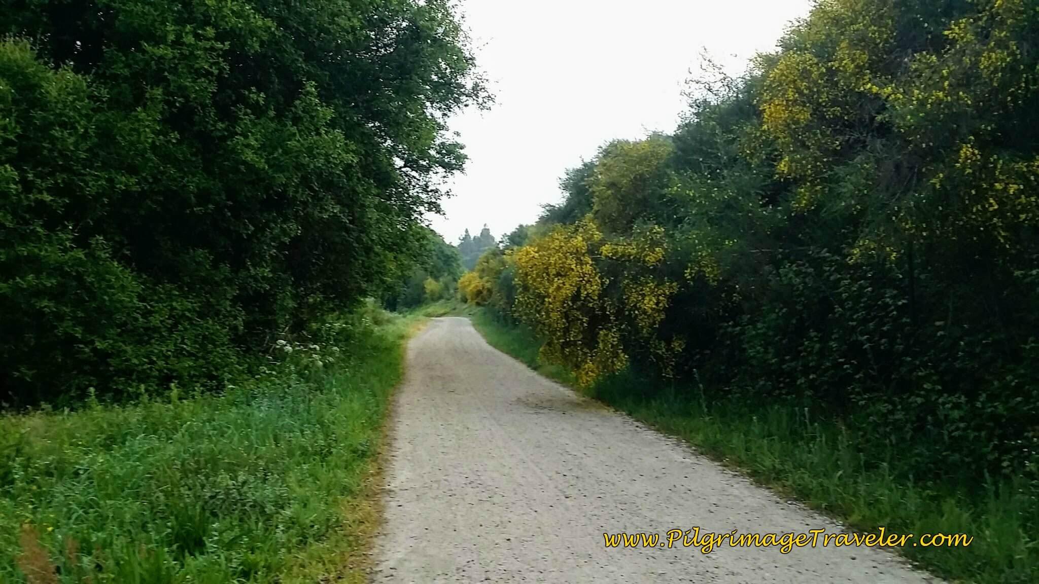 Dirt Lane After O Castrado on day twenty-three, Camino Portugués
