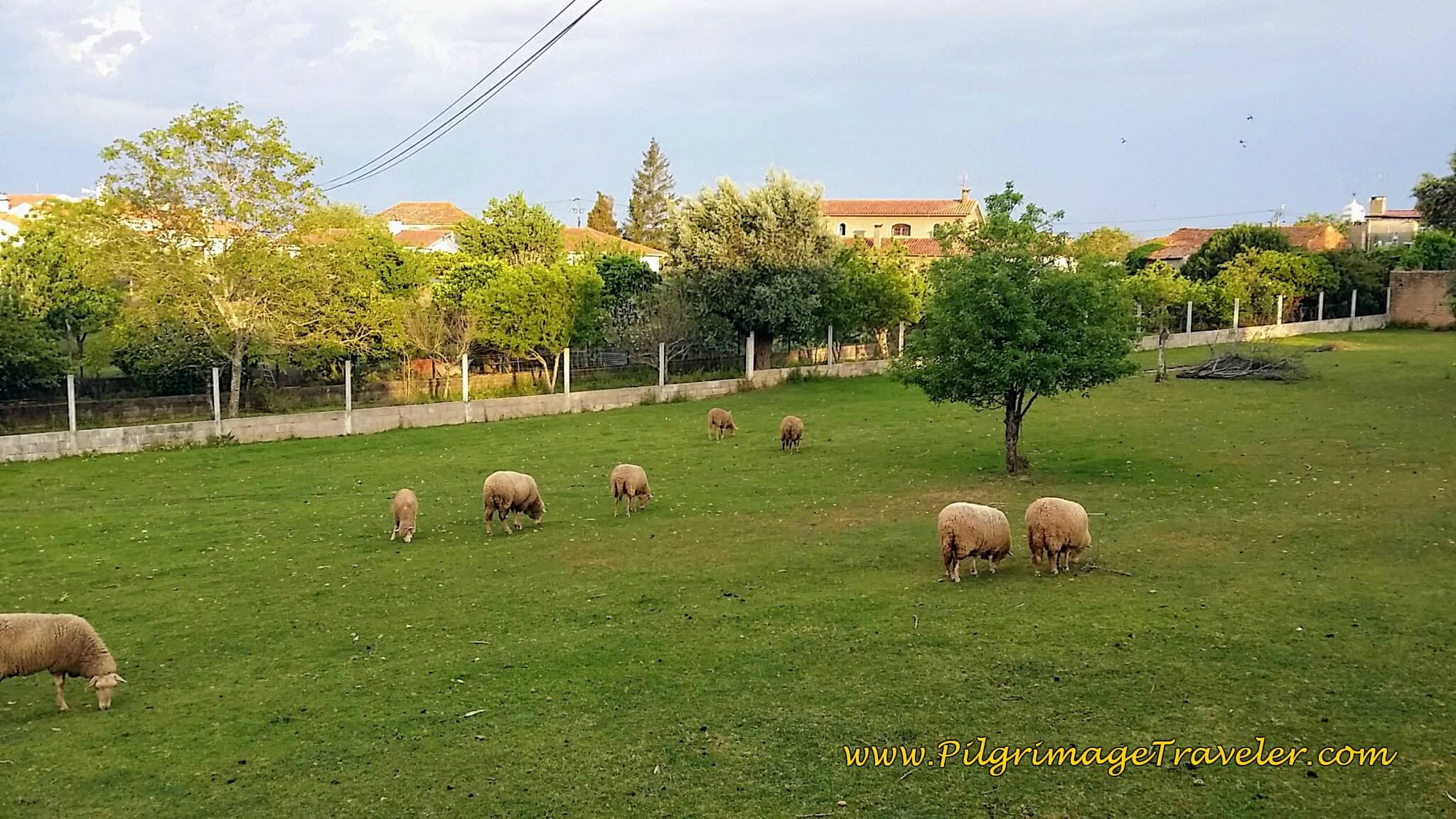 Sheep Along the Way with Aguim Alight in the Background