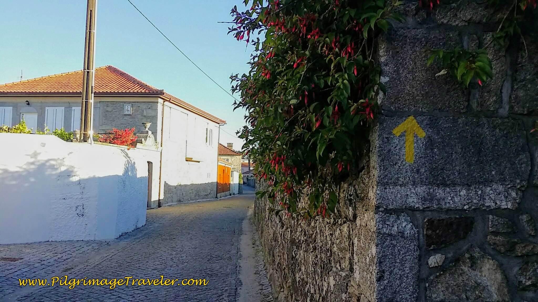 Yellow Arrow Along the Rua de São João on day seventeen of the Camino Portugués