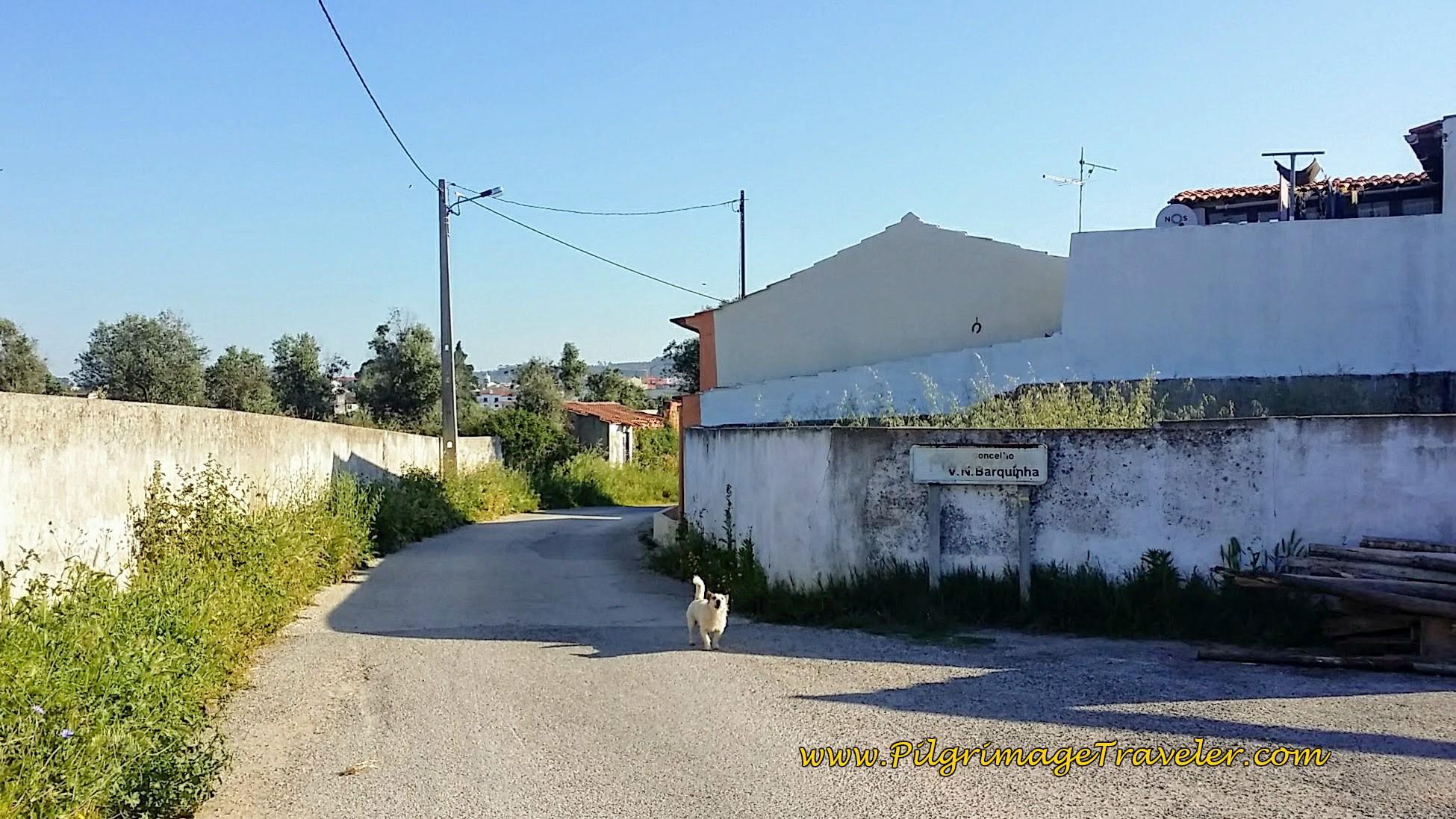 Doggie Welcomes Us to Vila Nova da Barquinha