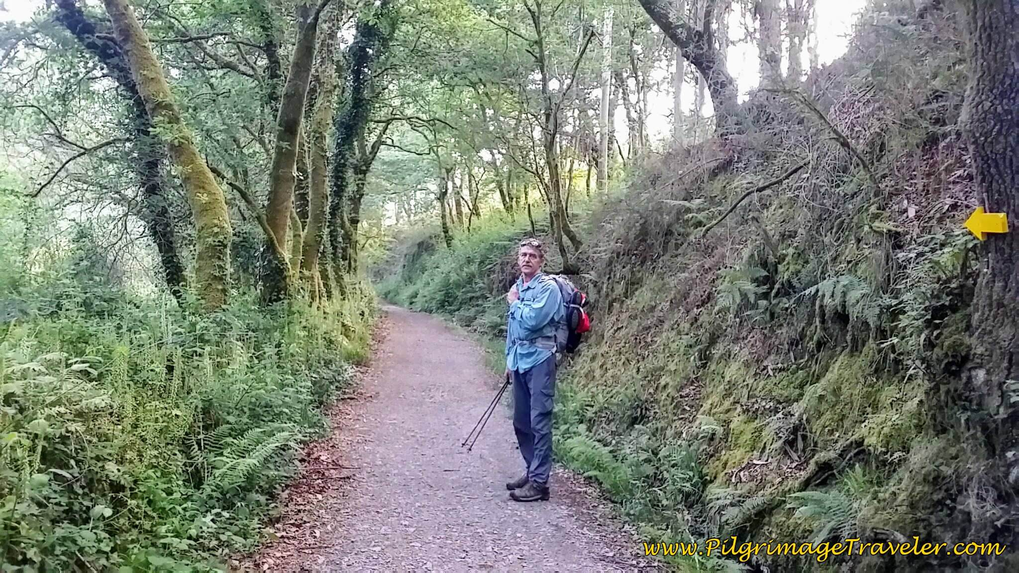 Forest Path by the Railroad Tracks on day twenty-three, Camino Portugués
