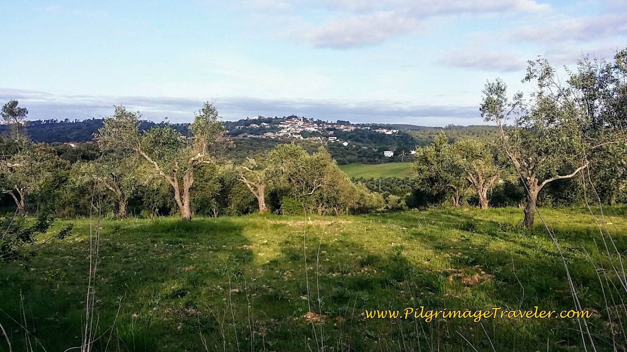 Olive groves and a view of the Portuguese countryside