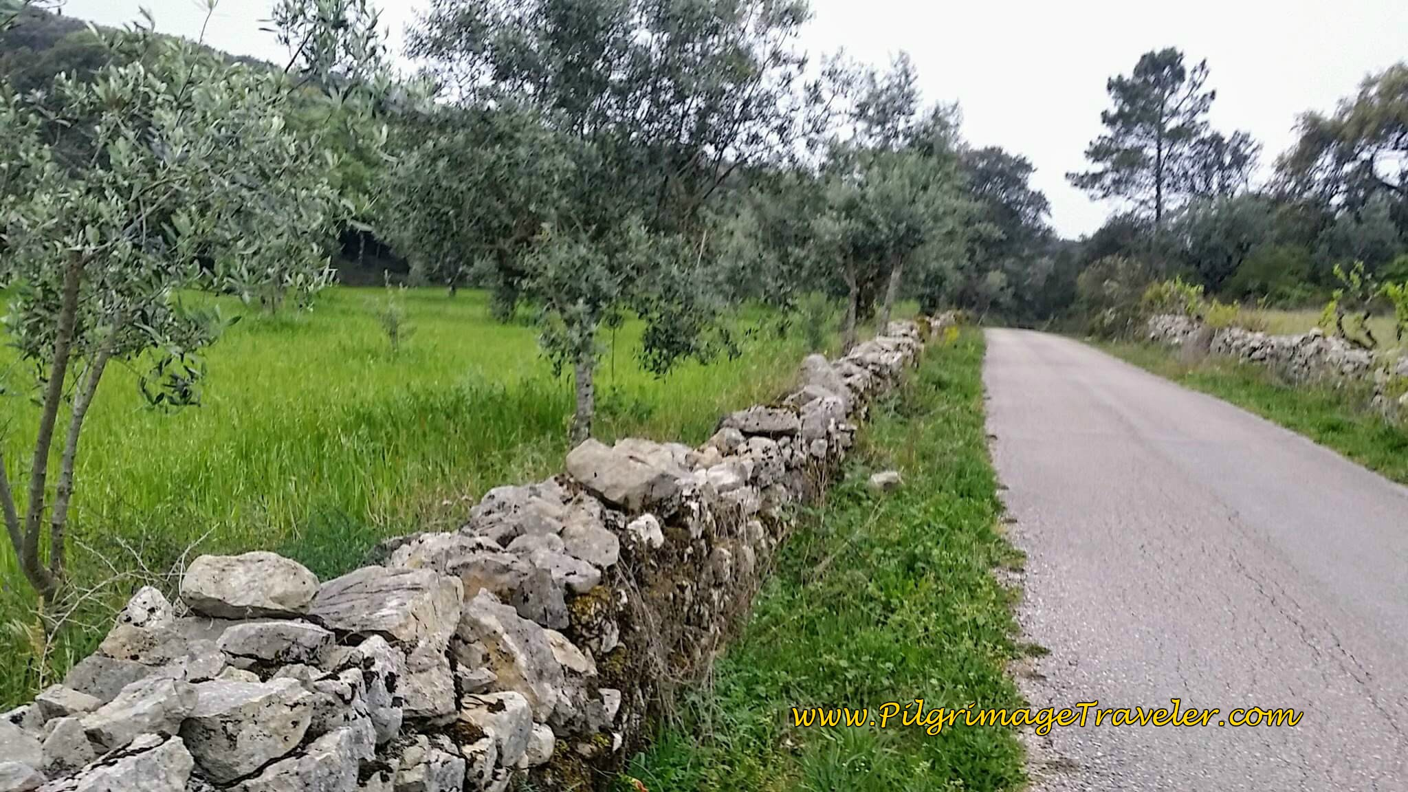 Olive Trees and Stone Walls - Another Common Sight