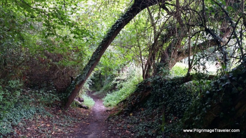 Forest Path, Camino Primitivo, Asturias, Spain