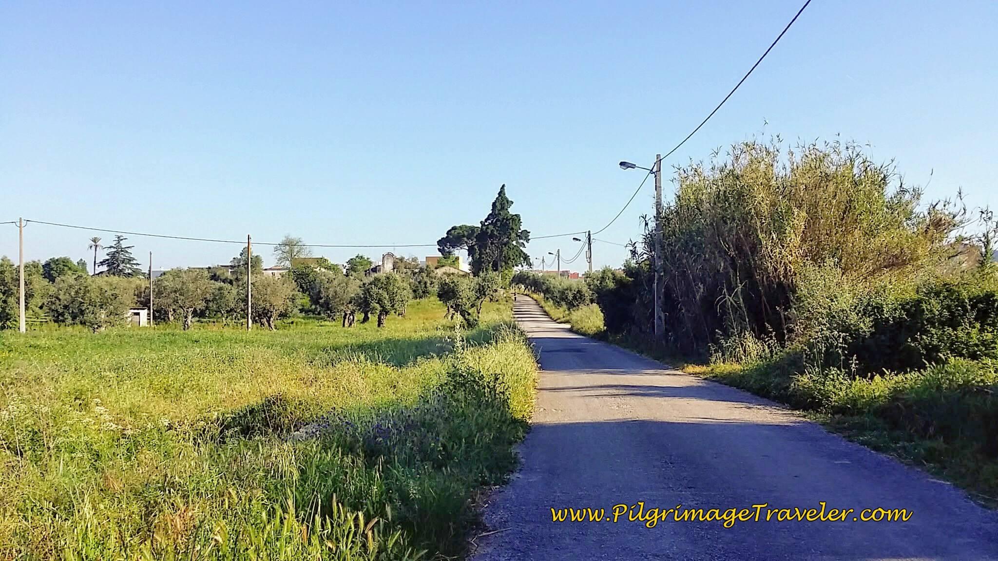 Walking on the Rua do Pedregoso just before Vila Nova da Barquinha, Portugal