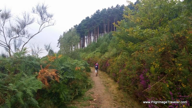 The Long Endless Morning Climb on Day Seven Camino Primitivo