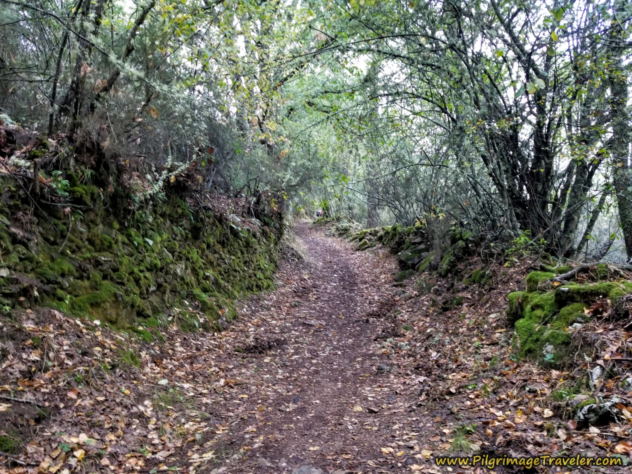 Forest Path After the Santuario