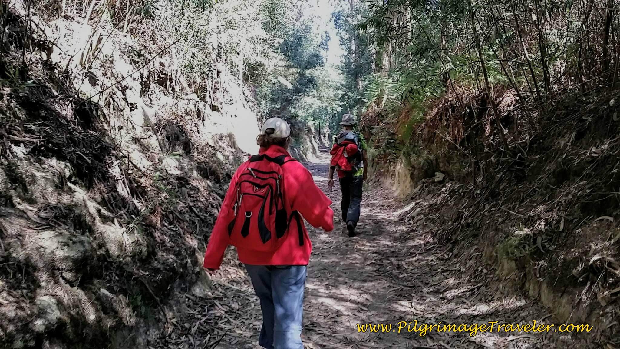 Walking Through the Forest on Day Nineteen of the Portuguese Way