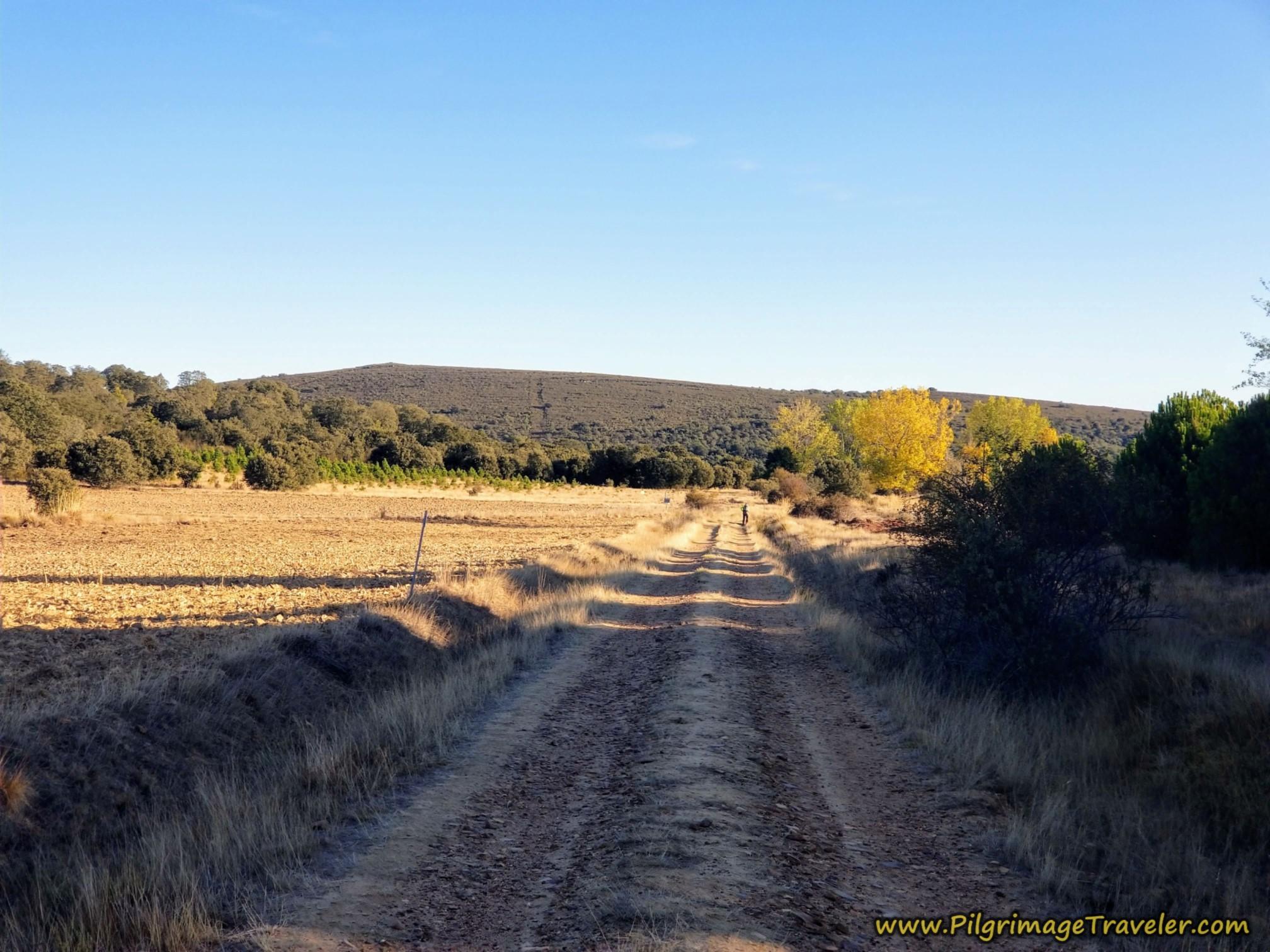 Cross Meadow