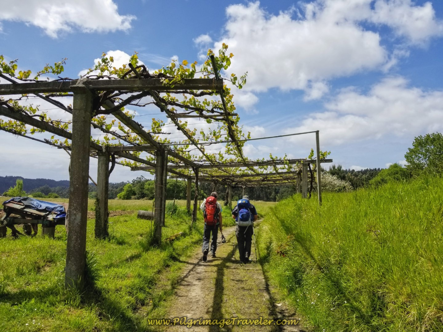 Rich and Steve Walk Through Grape Arbor on Farmer's Lane