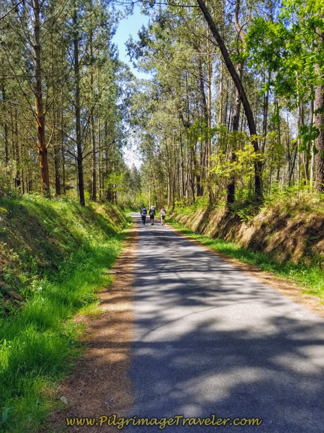 More walking through Lovely Forest on day five of the Camino Inglés