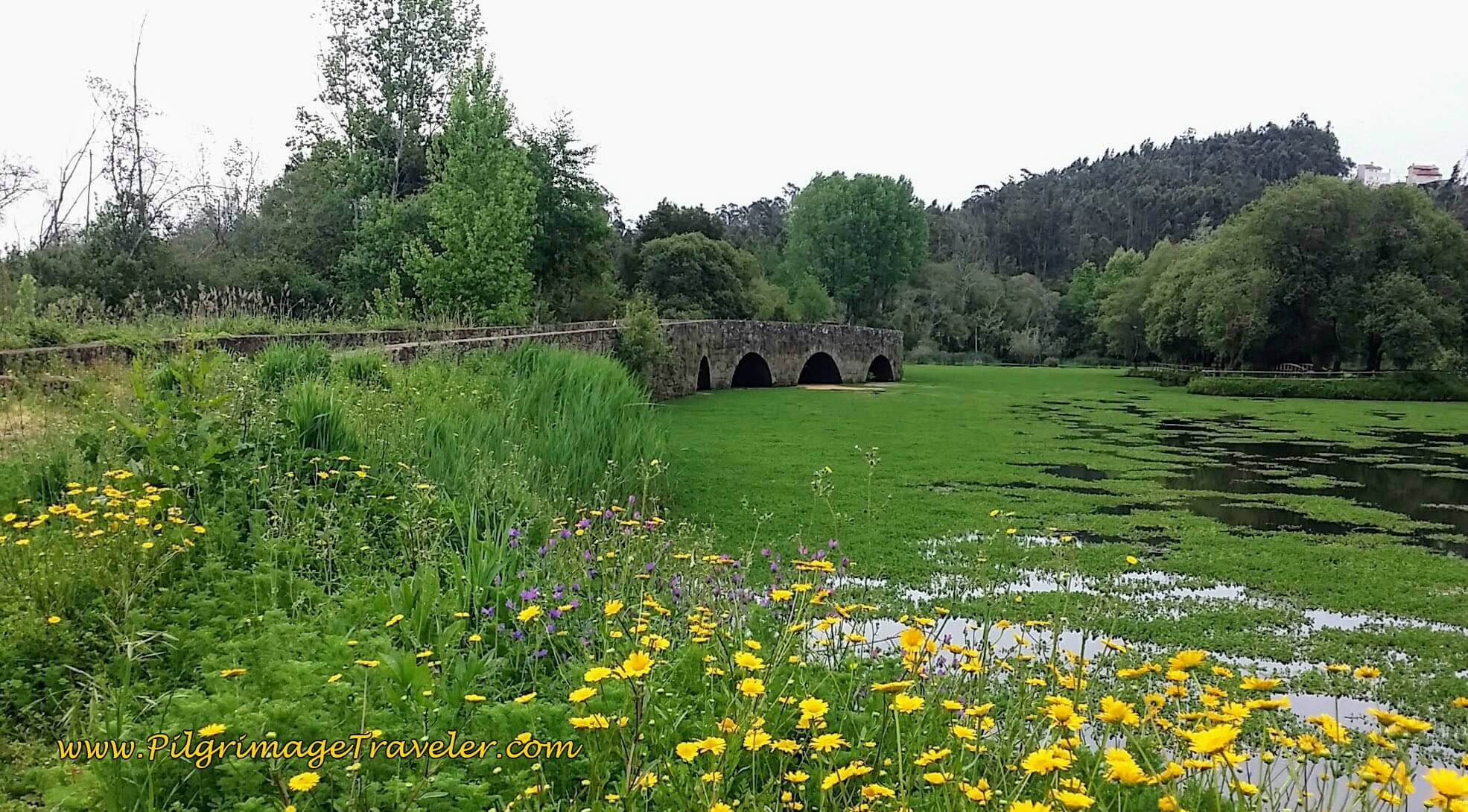 A Look Back at the Roman Bridge, the Ponte do Cabeço do Vouga in Lamas do Vouga on day twelve on the Camino Portugués.