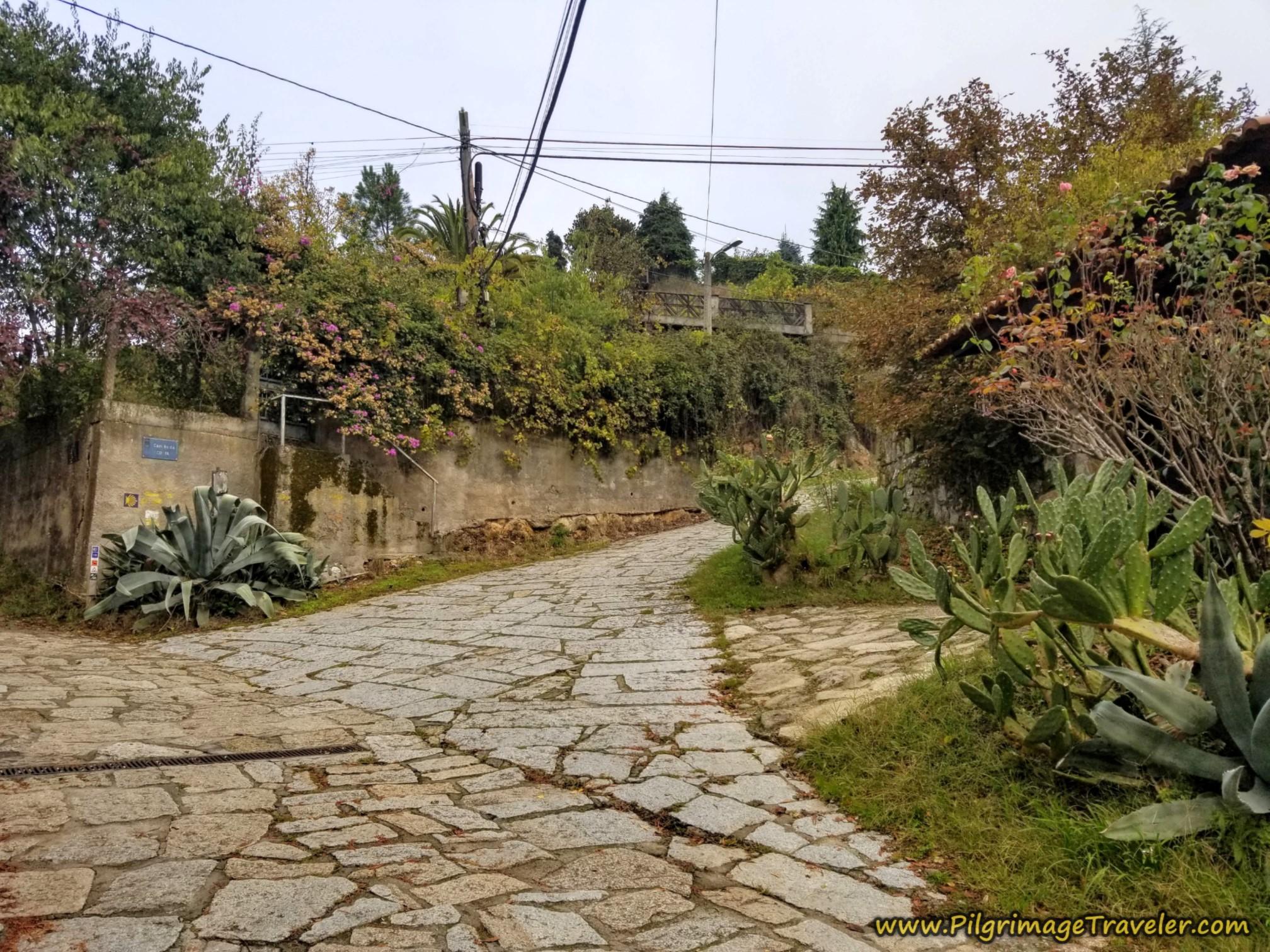 Right Road Bend, on the Camiño Real Cudeiro Sur, Camino Sanabrés, Ourense to Cea