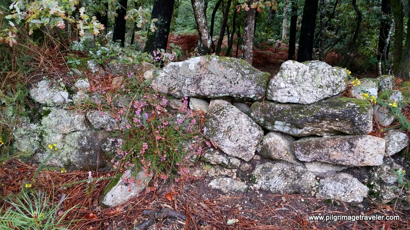Close-Up  of Heather by a Stone Wall, Monte Pedroso, Galicia, Spain
