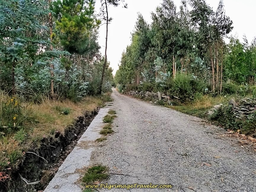 Join Improved Forest Path