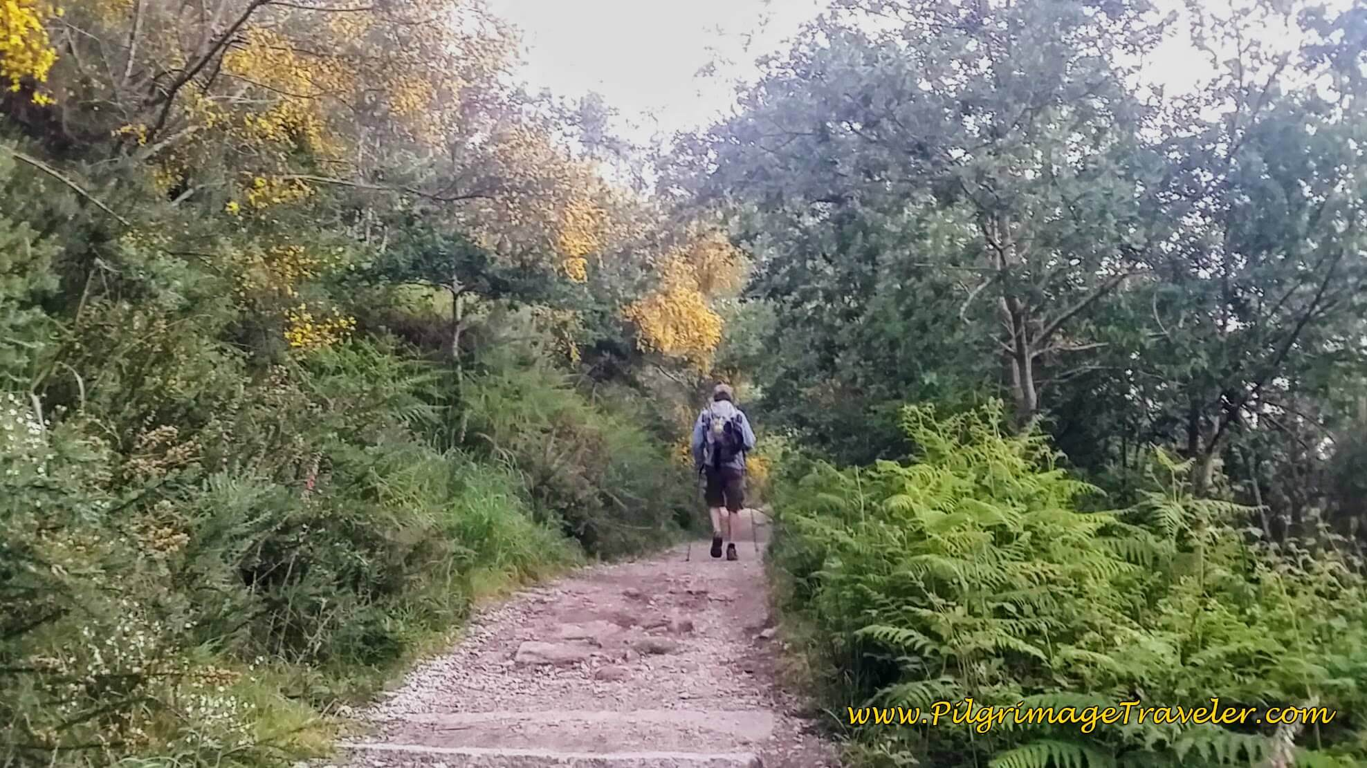 Downhill on Forest Path, Day Twenty-Four, Camino Portugués
