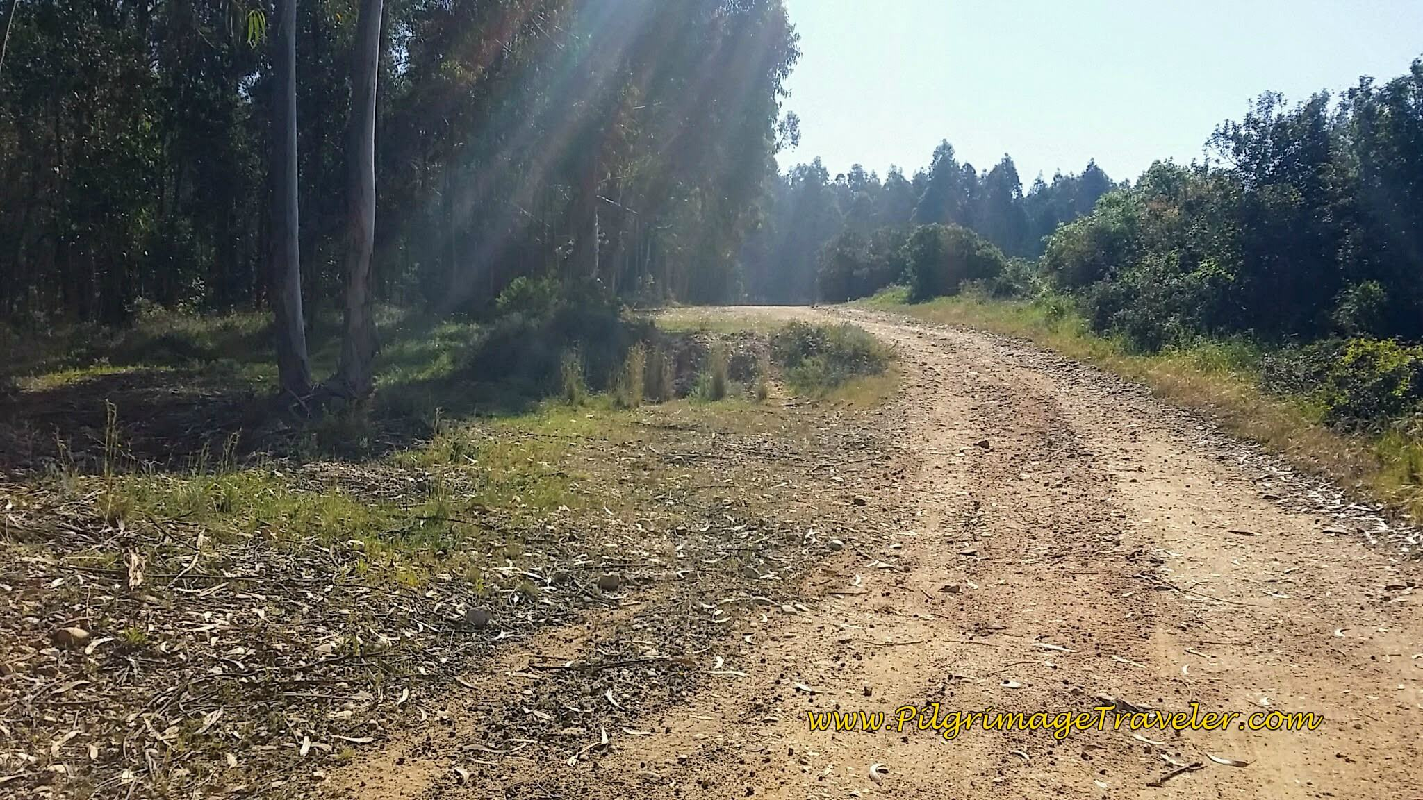 Camino Turns Off N110 and On a Dirt Lane