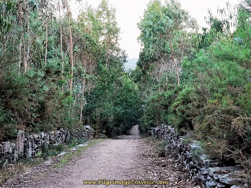 Wall-Lined Forest Path