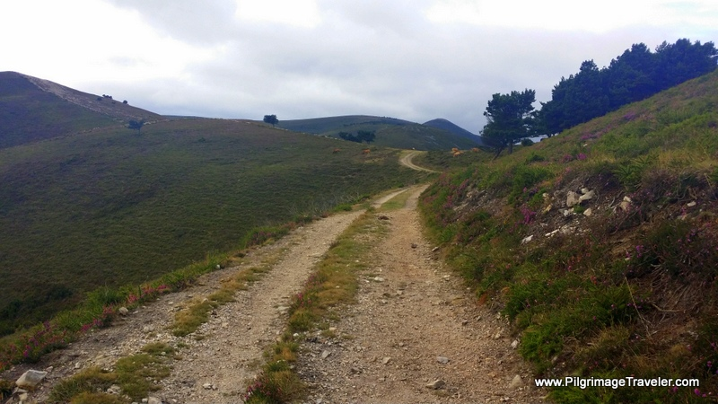 Closer to Treeline on the Hospitales Route