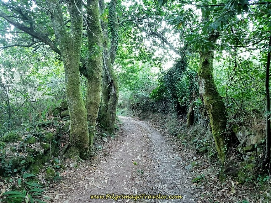 Lovely Enchanted Forest on day three of the Camino Finisterre to Muxía