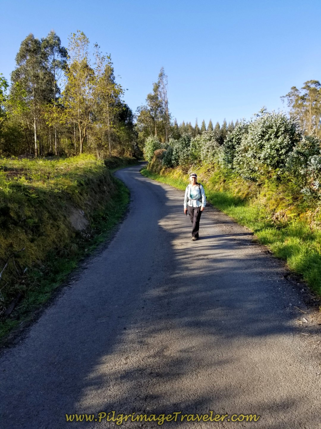 Elle on Road to Cultivated Wooded Area on day two of the La Coruña Arm of the Camino Inglés