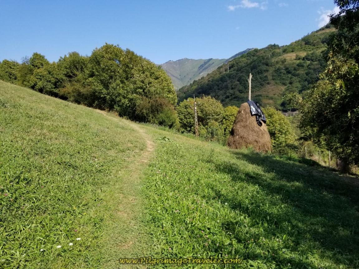 Keep Climbing Through a Meadow