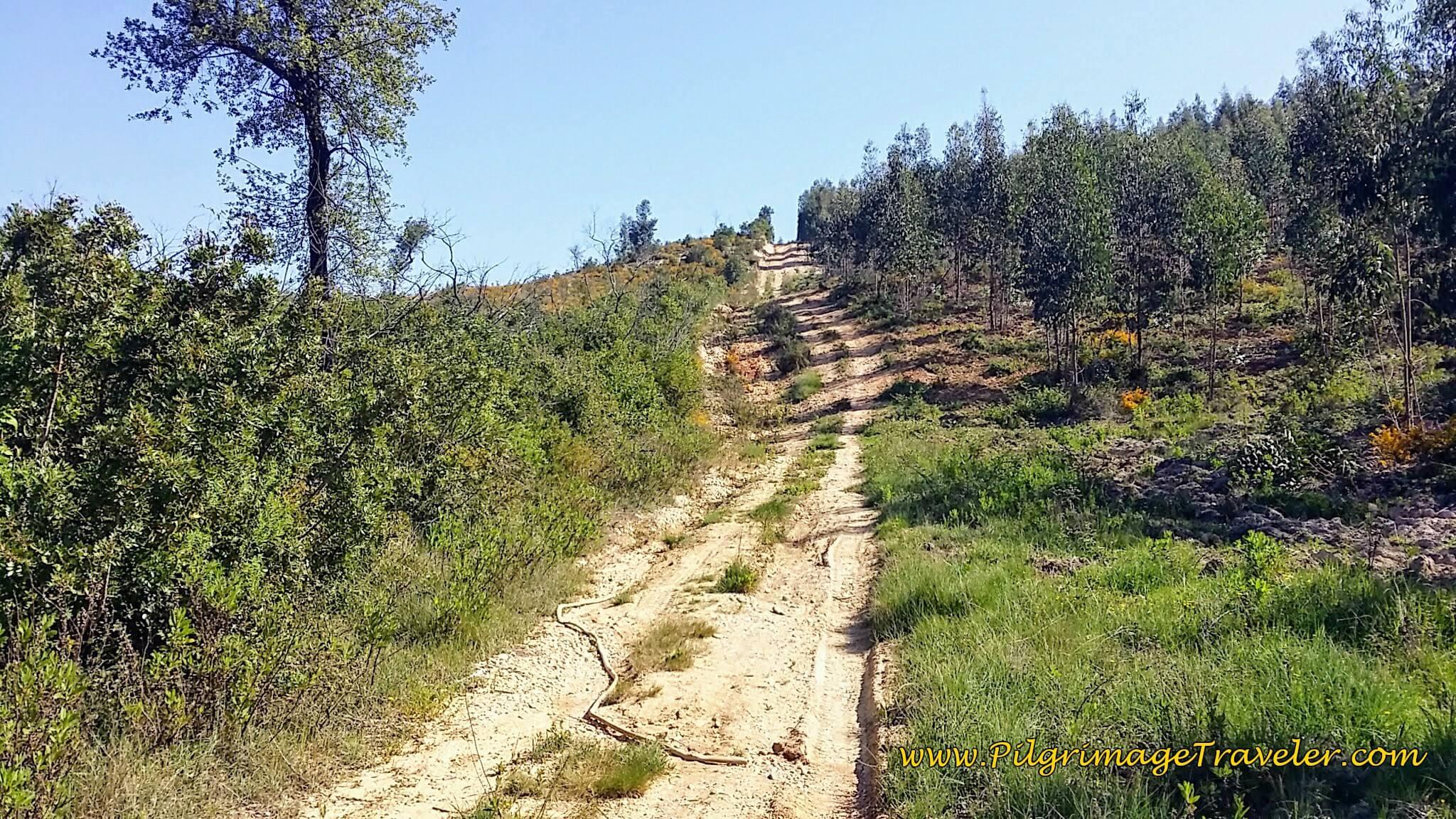First Big Hill on Day Five, Camino Portugués