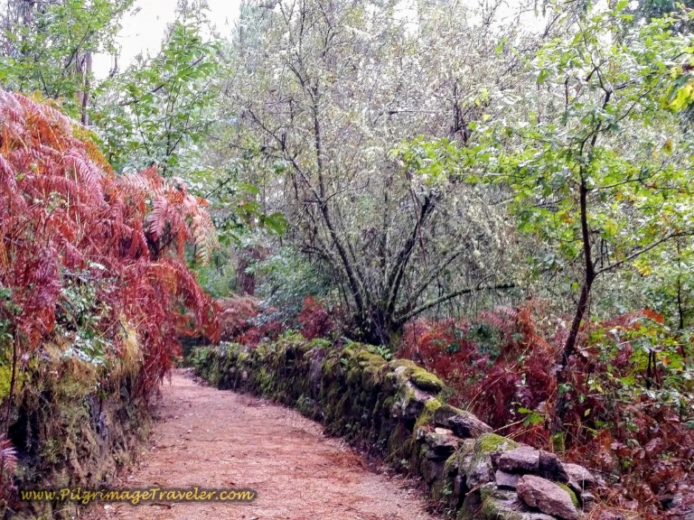 Same Path in Autumn
