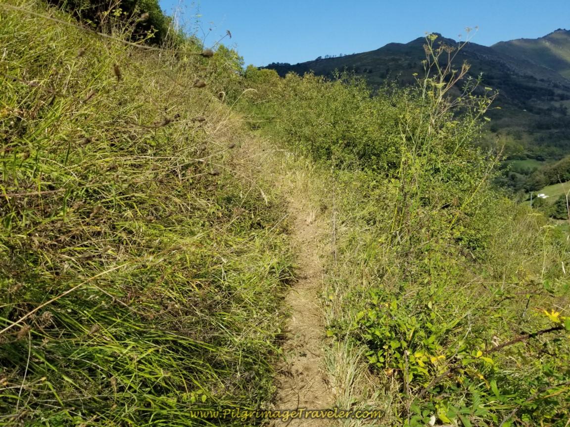 Rugged Overgrown Path