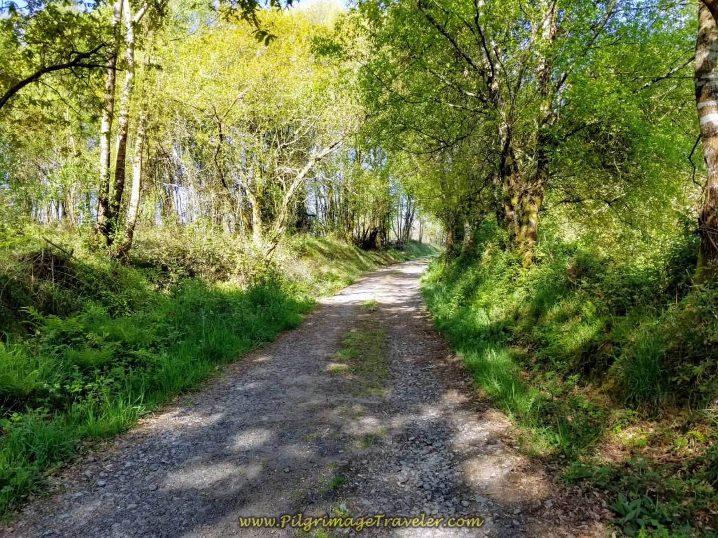 Shady Lane on Day Six of the Camino Inglés