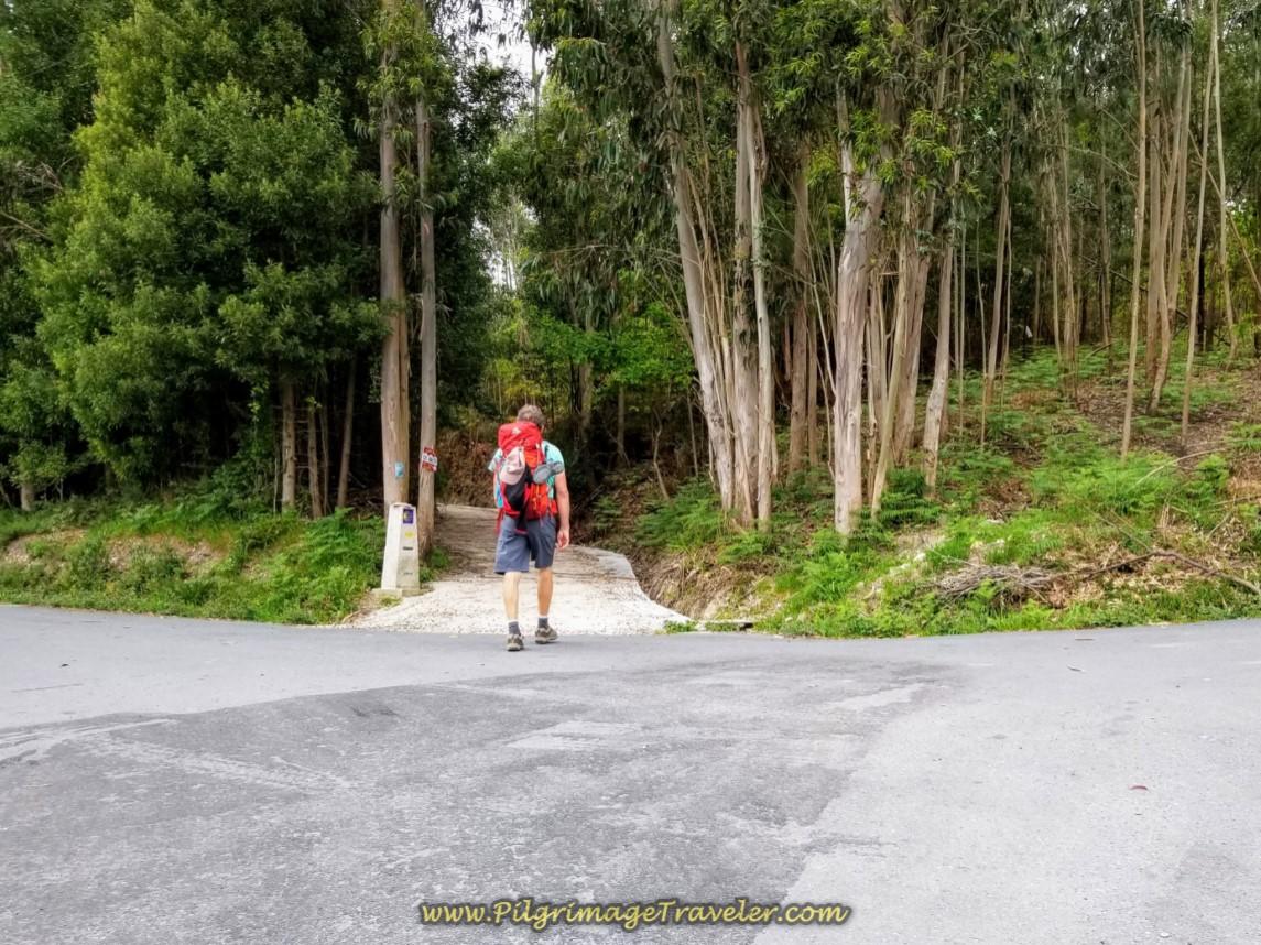Begin Second Forest Pathway System of Day One on the Camino Finisterre