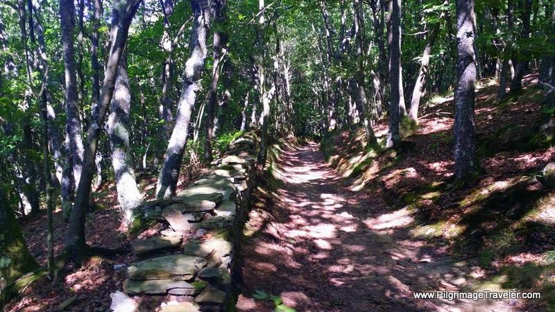 Forest Floor Relief from the Sun, near Villaluz, in Asturias, Spain