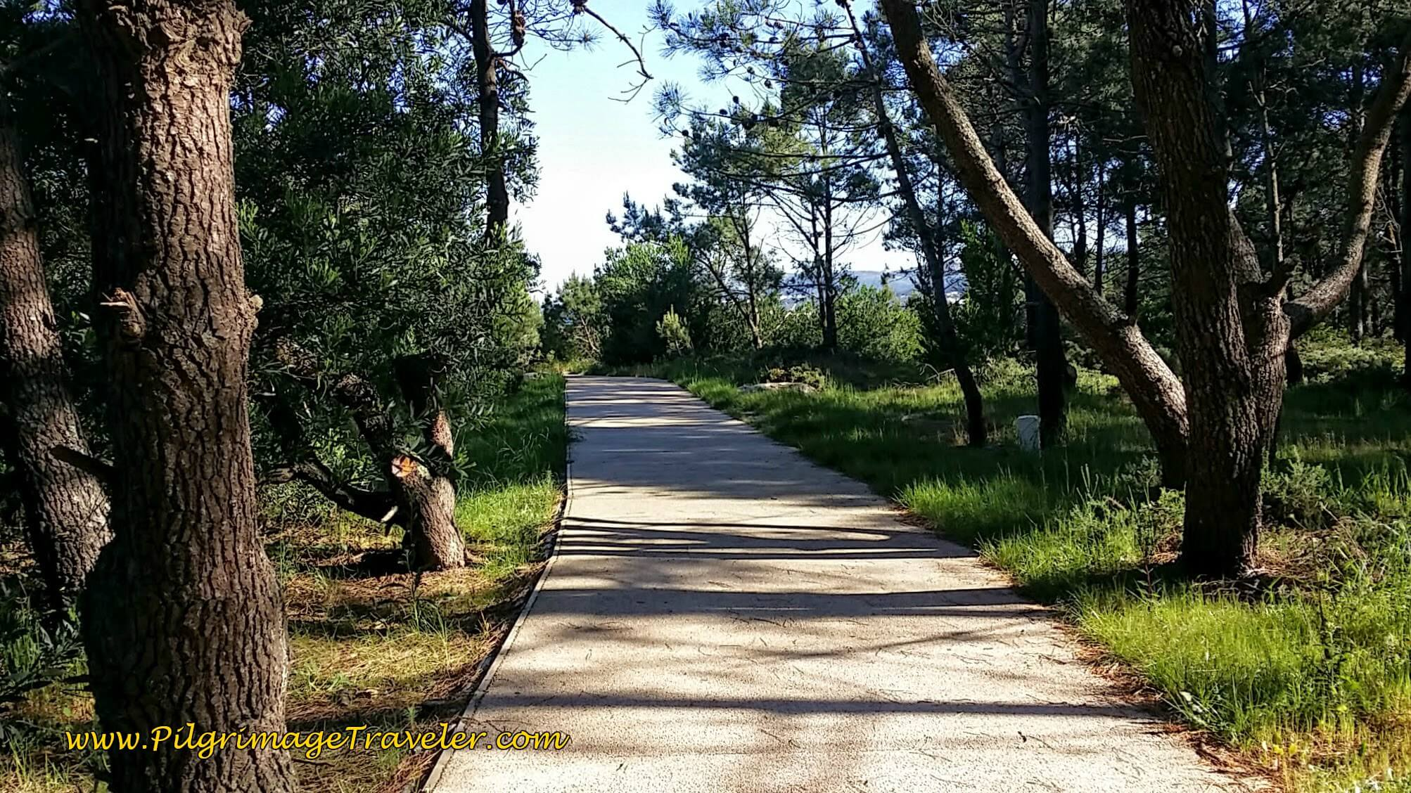 Concrete Path Leaving Montedor on day eighteen of the Portuguese Way on the Senda Litoral