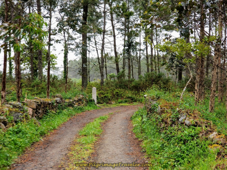 Two-Track Lane Near A Canosa