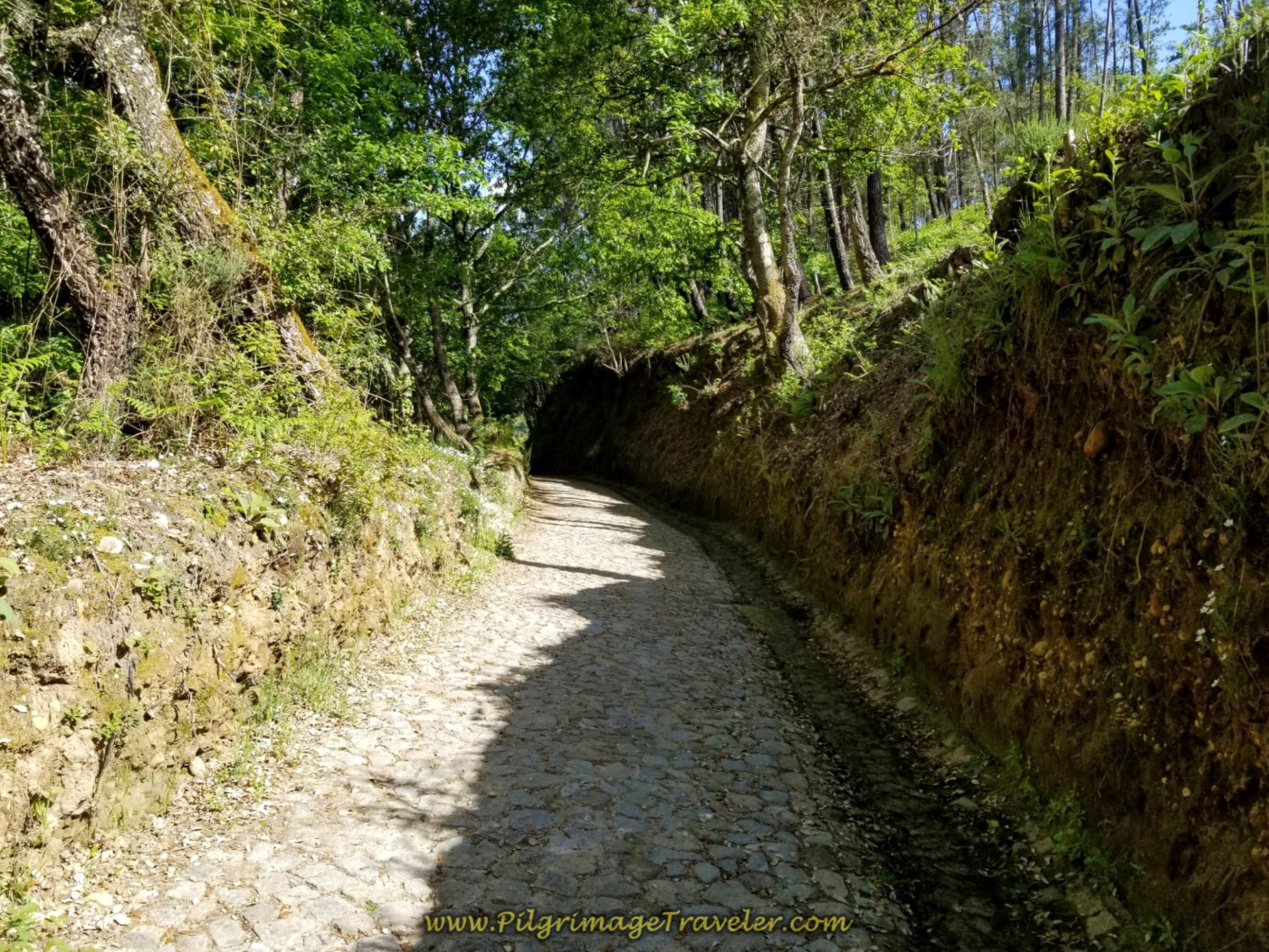 Onward on Tree-Lined Cobblestone Road to Pedreira on day nineteen on the Central Route of the Portuguese Camino