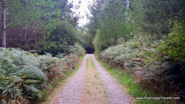 After San Romao the Camino Primitivo Turns Into Country Lane