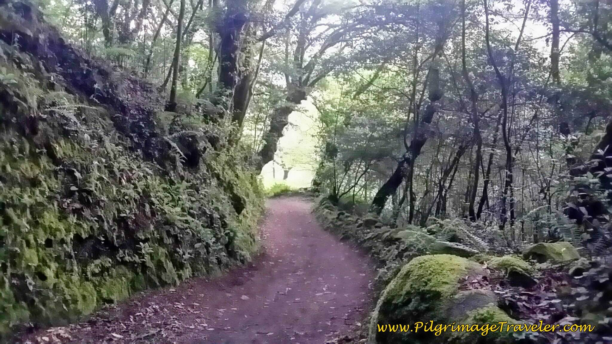 Through the Moss-Covered Enchanted Forest, Day Twenty-Four, Camino Portugués