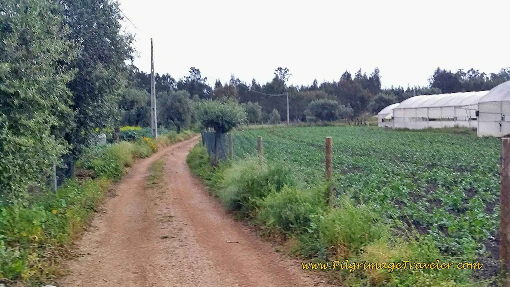Rua Carvalhas and Pavement End Here at the Greenhouses on the Portuguese Way
